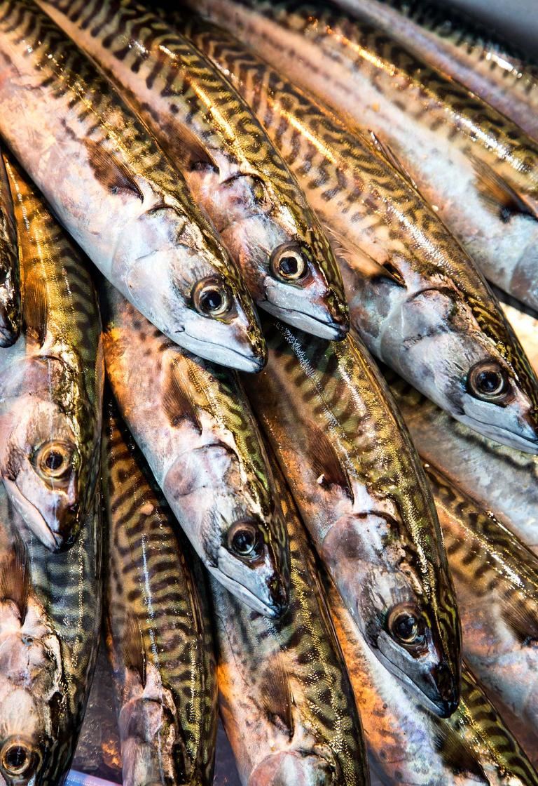 Image of fish in fish market in Trouville
