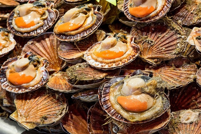 Image of scallops in a French fish market