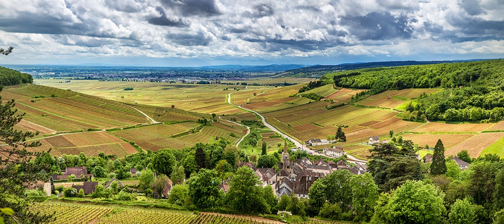 Vineyards and a town in Burgundy