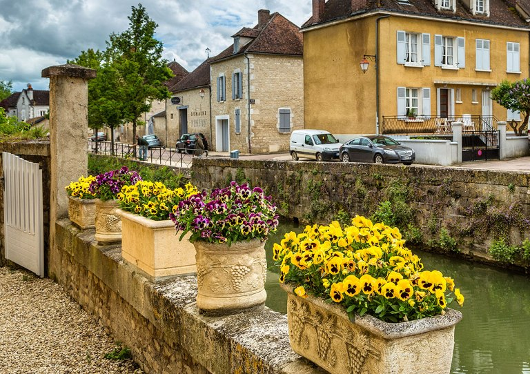 Flowers on thee banks of the river Serein, Chablis