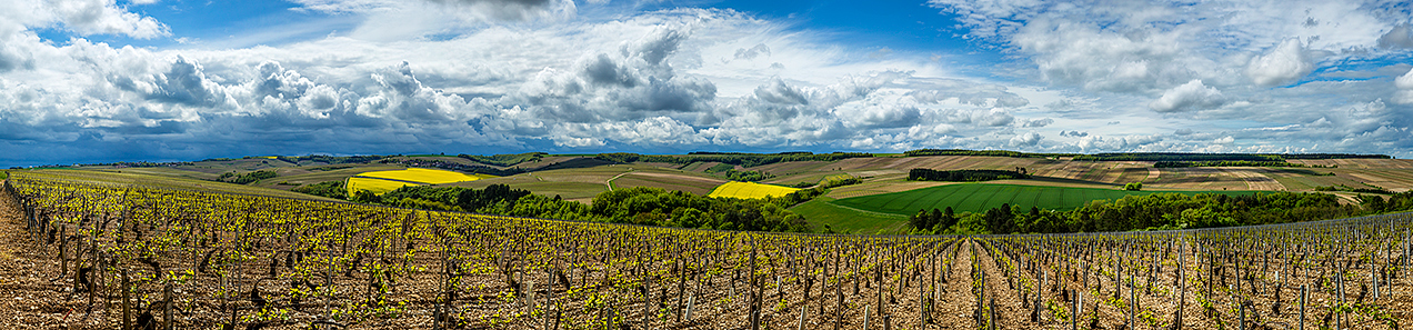 Vineyards near Chablis