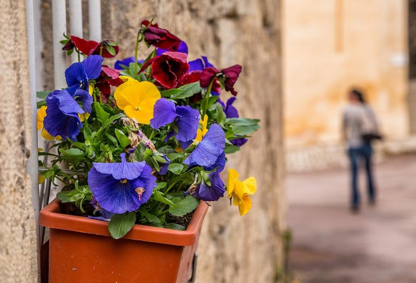 Flowers in Flavigny-sur-Ozerain