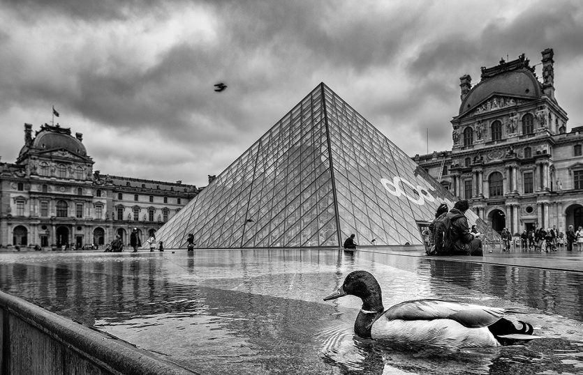 Duck outside the Louvre