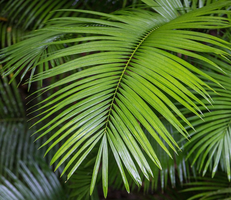 Ferns in the Daintree Rainforest - © Michael Evans Photographer 2013  - www.michaelevansphotographer.com
