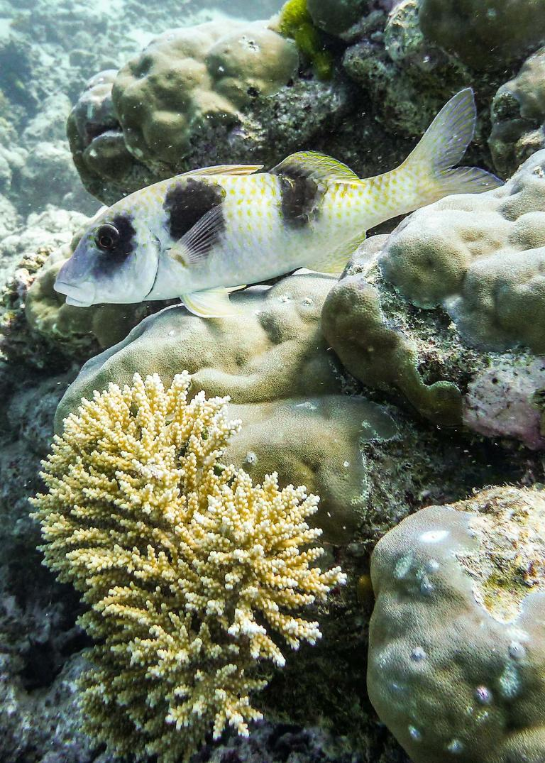 Diving the Great Barrier Reef, Australia - © Michael Evans Photographer 2013  - www.michaelevansphotographer.com