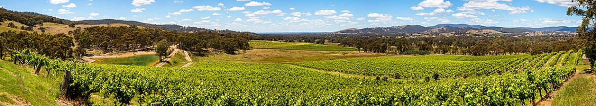 Warrenmang winery panorama © Michael Evans Photographer 2014