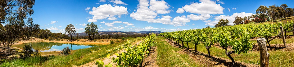 Warrenmang winery panorama including the small lake © Michael Evans Photographer 2014
