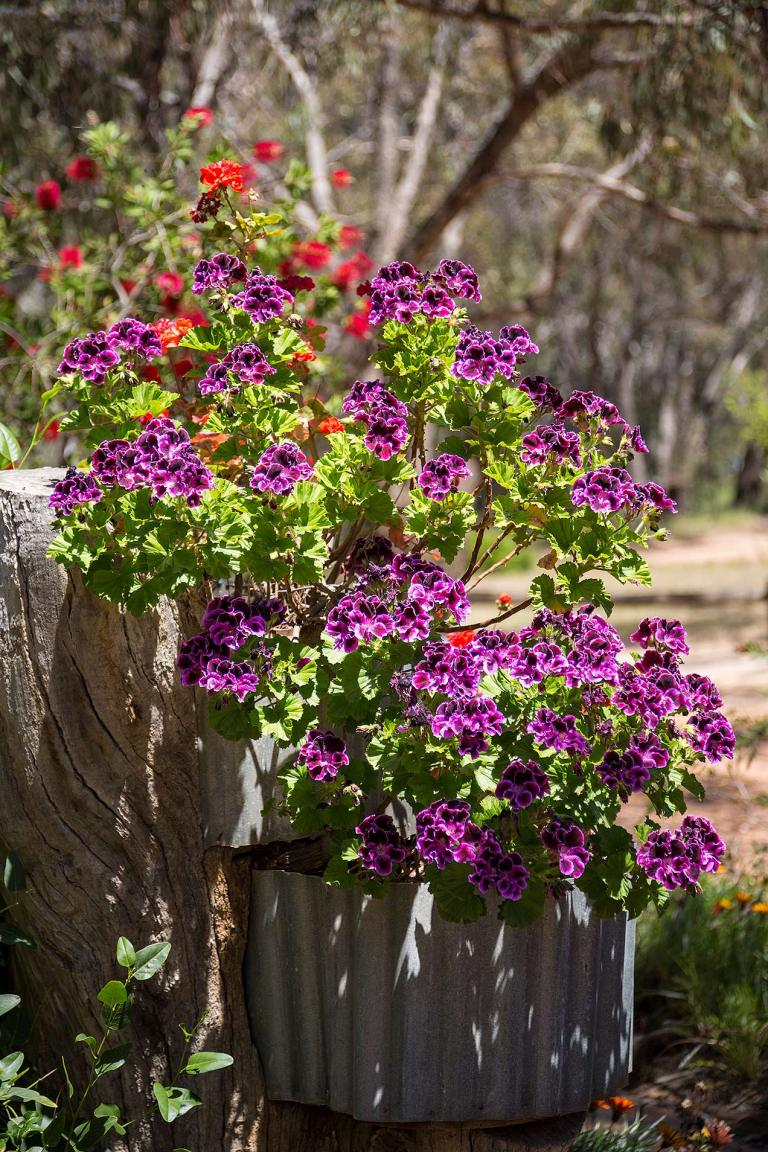 Flowers at Warrenmang winery © Michael EVans Photographer 2014