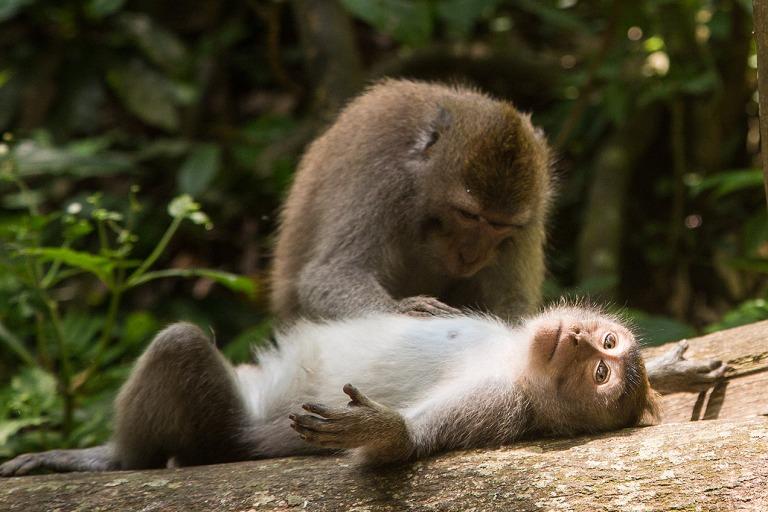 Monkey at Monkey Forest Ubud, Bali © Michael Evans Photographer 2014 - www.michaelevansphotographer.com