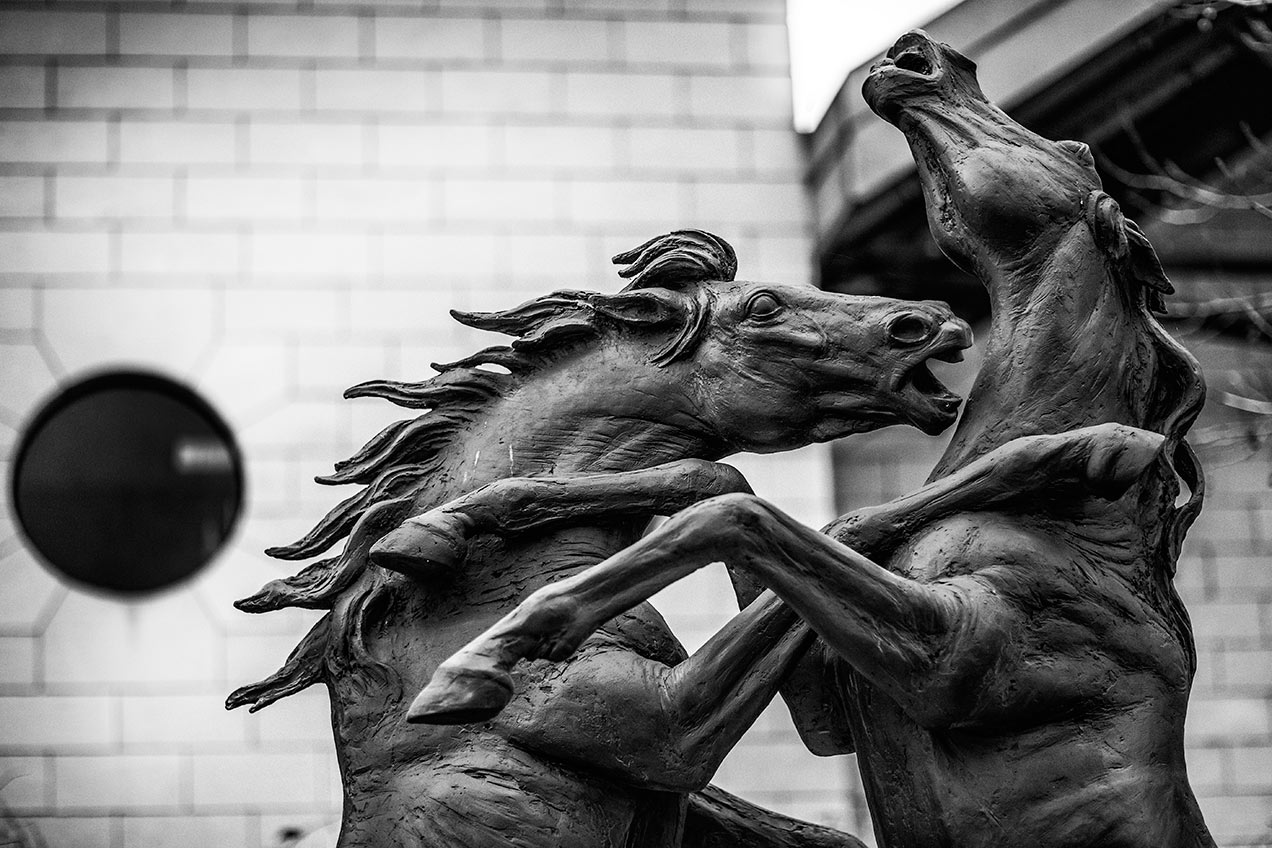 Image of Stallions Rampant by Gabriel Sterk - © Michael Evans Photographer 2014