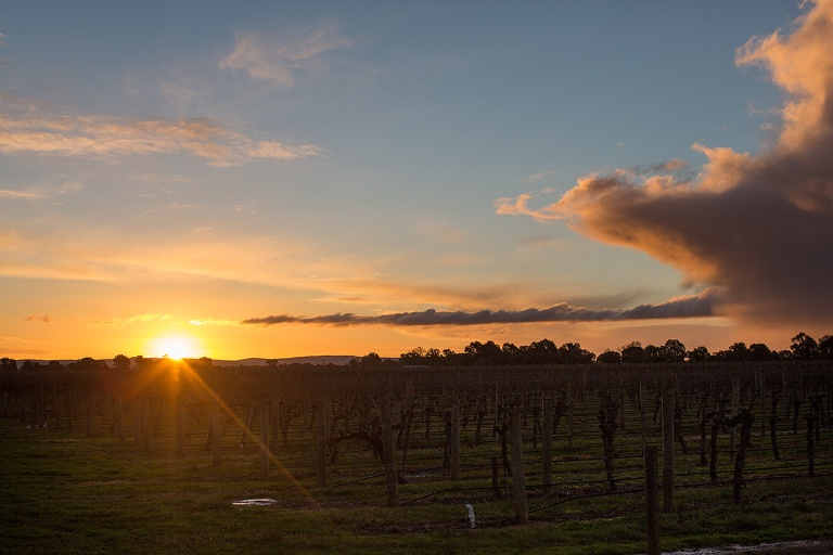 Sunset over the Brown Brothers vineyard © Michael Evans Photographer 2014 - www.michaelevansphotographer.com