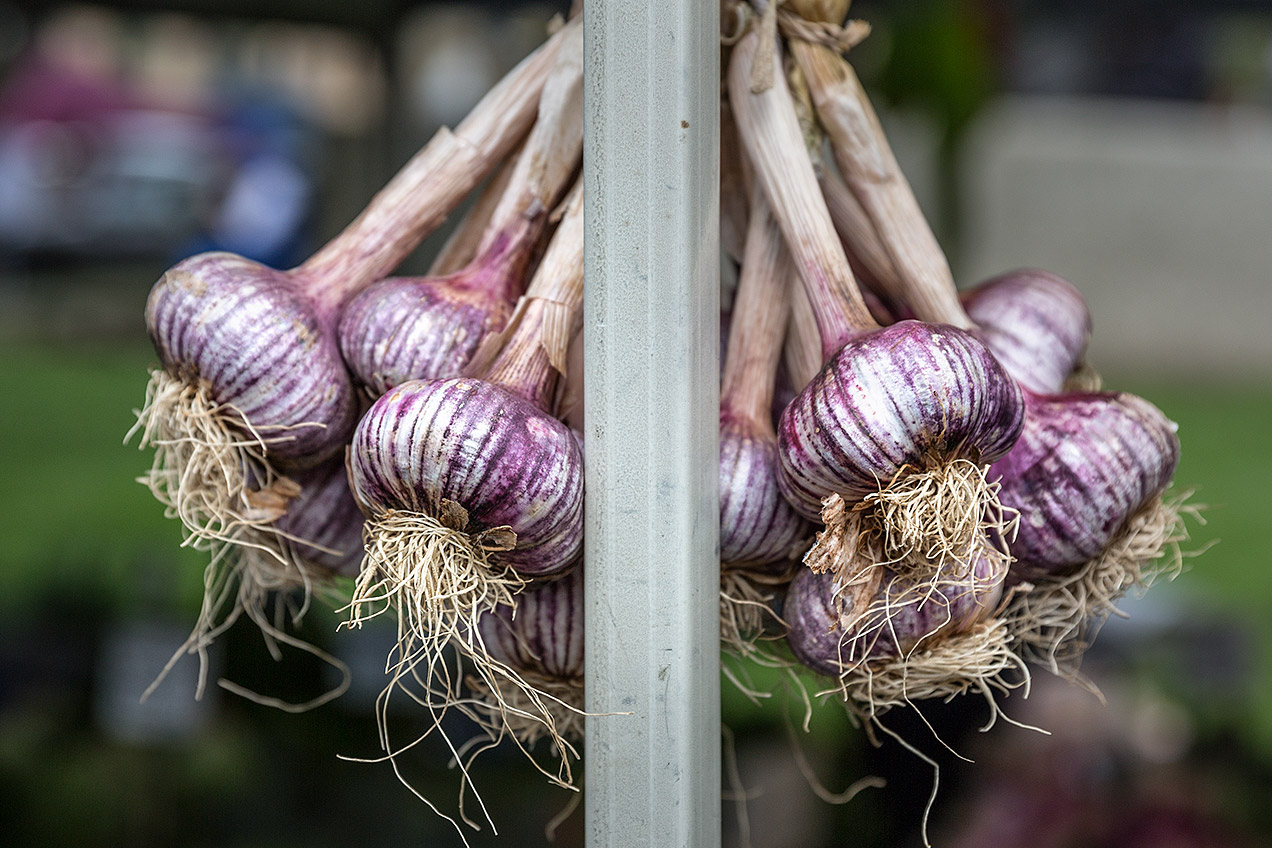 Garlic at the Salamanca Market © Michael Evans Photographer 2015
