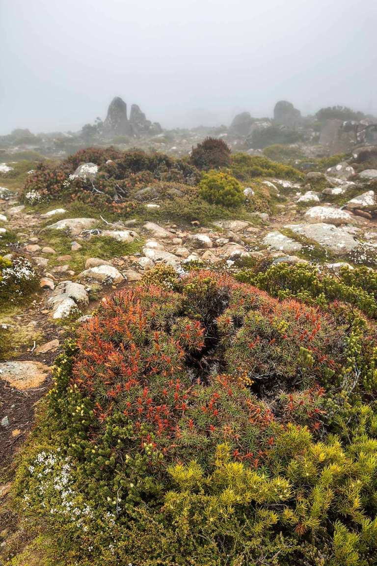 Mount Wellington  © Michael Evans Photographer 2015