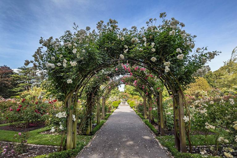 Rose arch, Christchurch Botanic Gardens © Michael Evans Photographer 2015