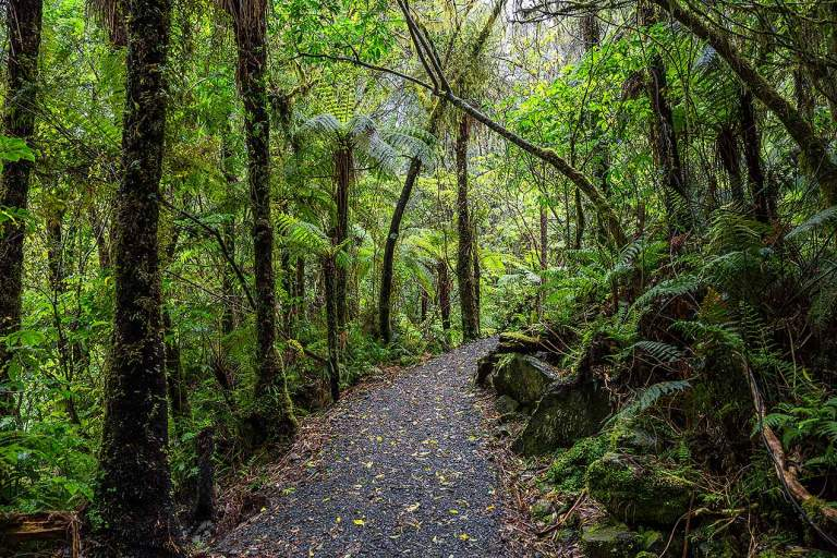 Rainforest near Fox Glacier © Michael Evans Photographer 2015