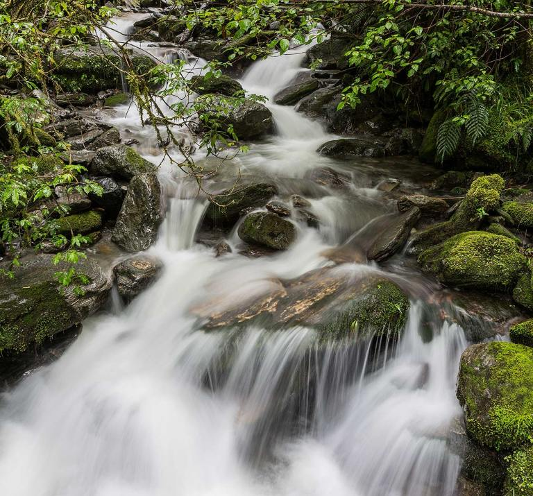 Rainforest stream near Fox Glacier© Michael Evans Photographer 2015