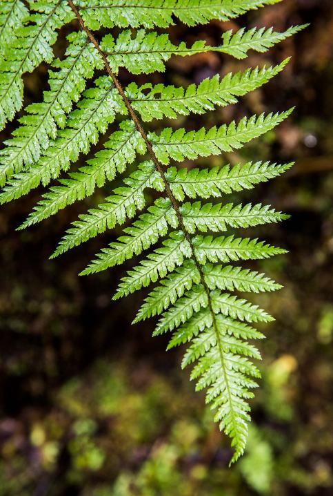 New Zealand Fern © Michael Evans Photographer 2015