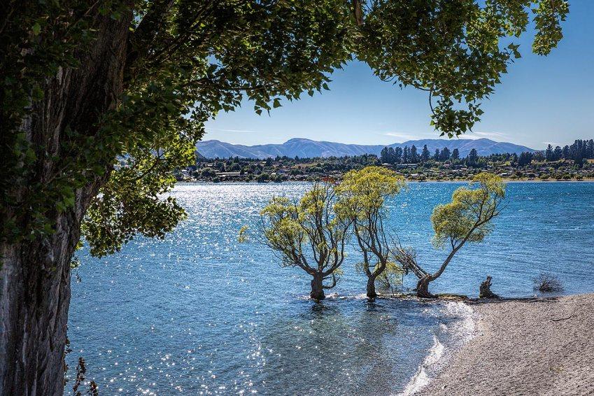 Trees around Lake Wanaka  © Michael Evans Photographer 2015