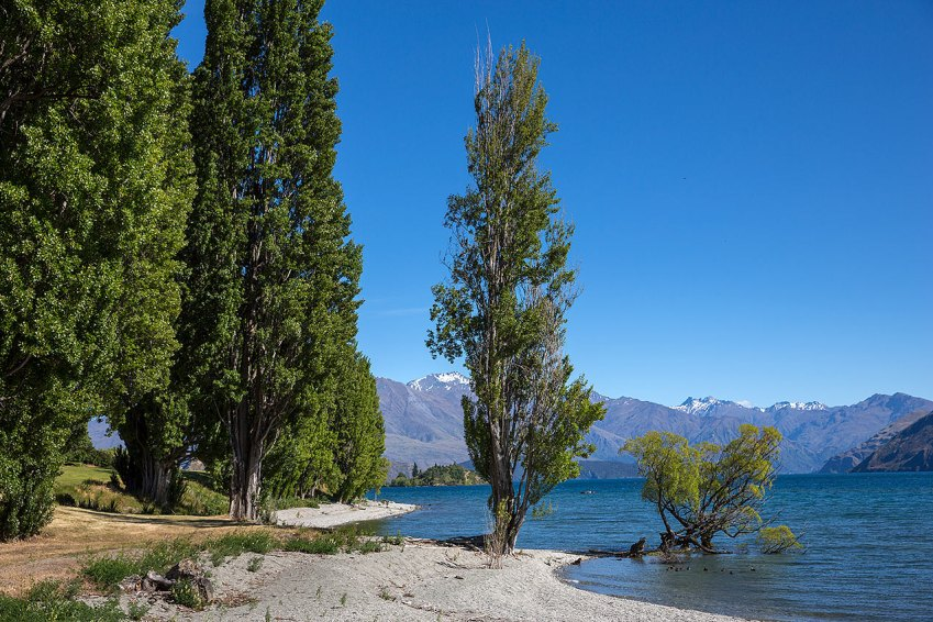 Trees around Lake Wanaka © Michael Evans Photographer 2015