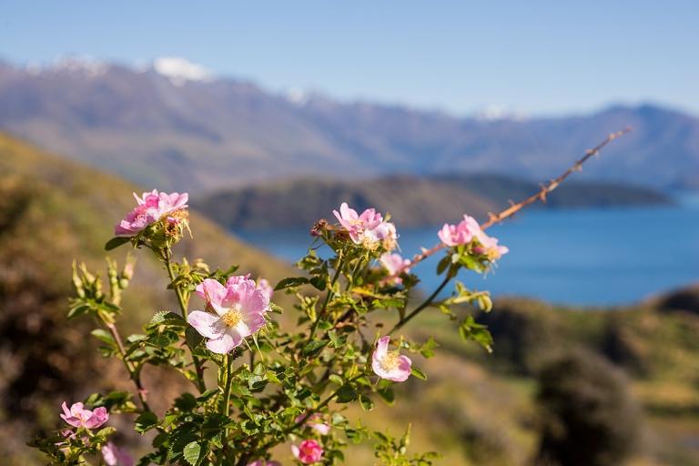 Flowers on Roy's Peak, Wanaka© Michael Evans Photographer 2015