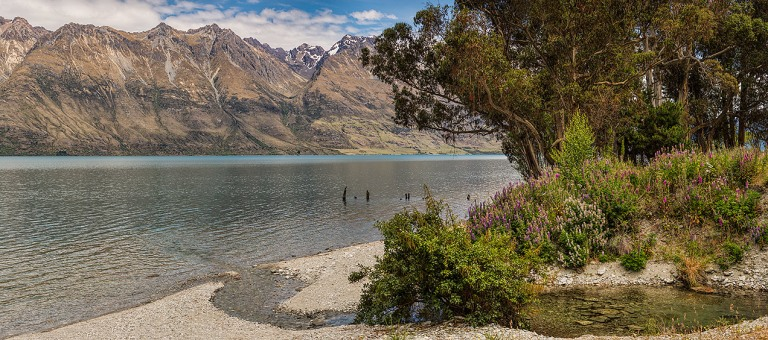 Beautiful Foxgloves aside Lake Wakatipu  © Michael Evans Photographer 2015