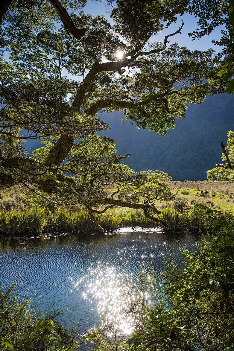 Fiordland National Park, New Zealand © Michael Evans Photographer 2015
