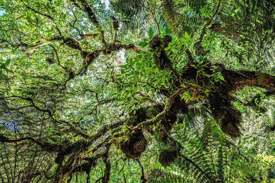 Caitlins Forest Park, New Zealand © Michael Evans Photographer 2015