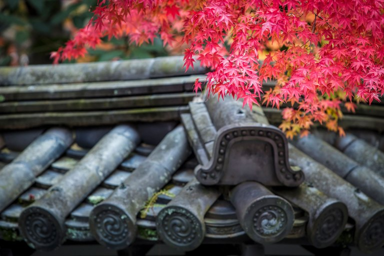 Autumn colour in Kyoto, Japan © Michael Evans Photographer 2017  - www.michaelevansphotographer.com