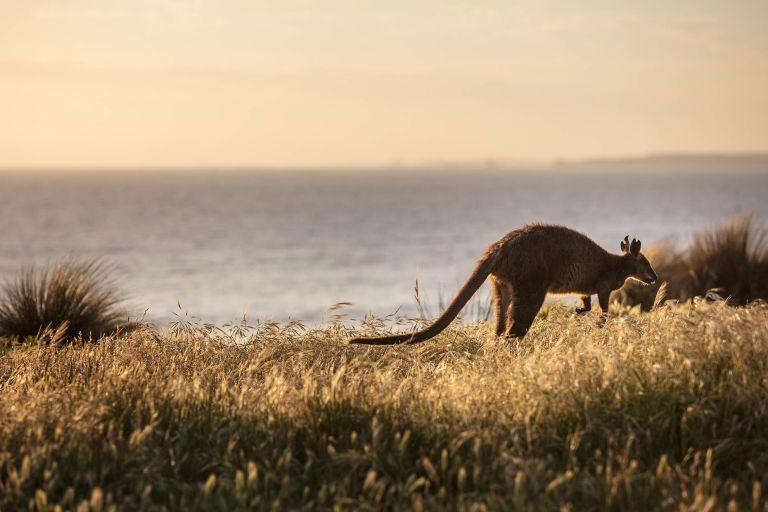 Phillip Island landscape photography - © Michael Evans Photographer 2018